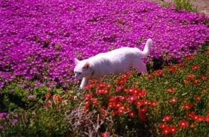 cat walking in plants