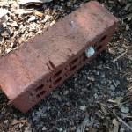 brick on top of helleborus seeds