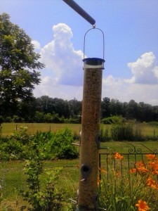 The first feeder, freshly filled.