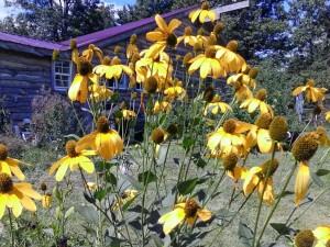 mystery yellow flower