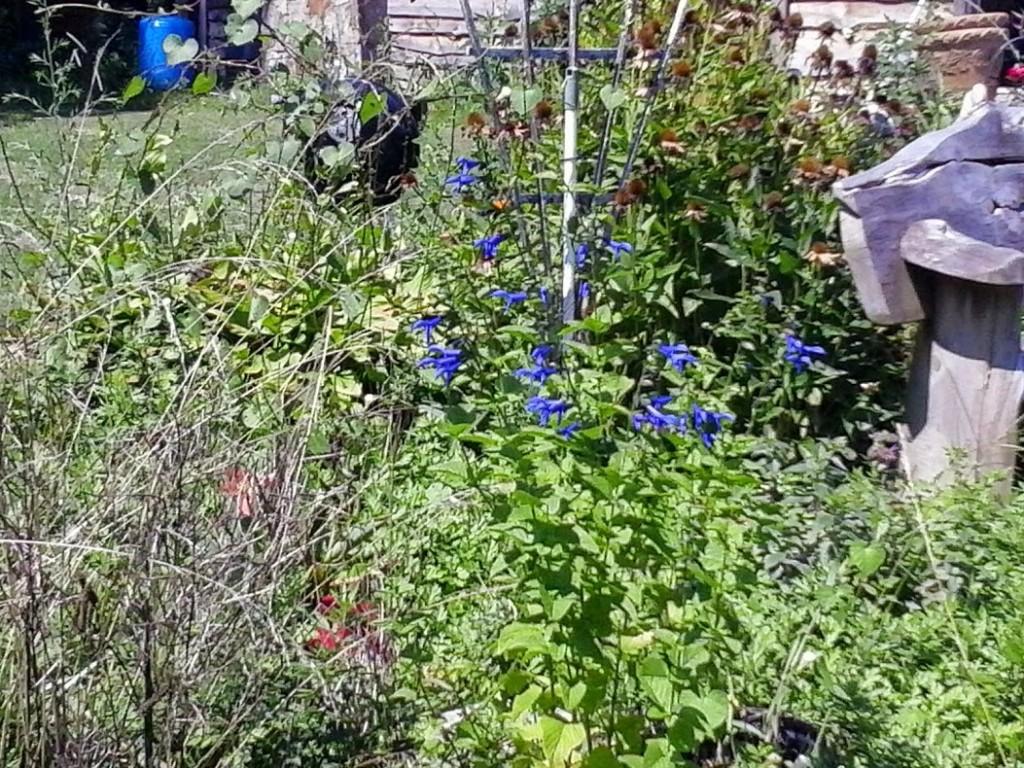 weedy garden 1