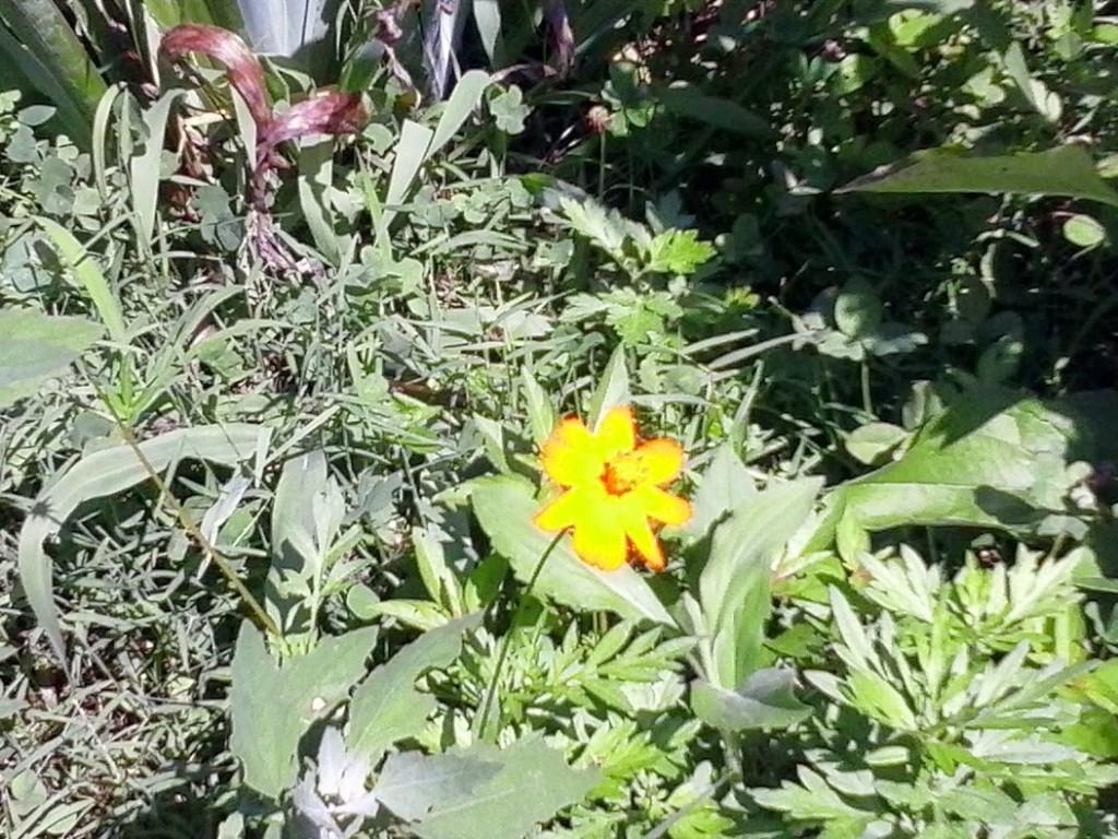 weedy garden2