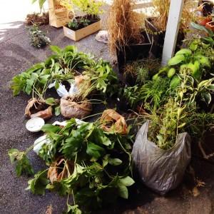 plantswapplants