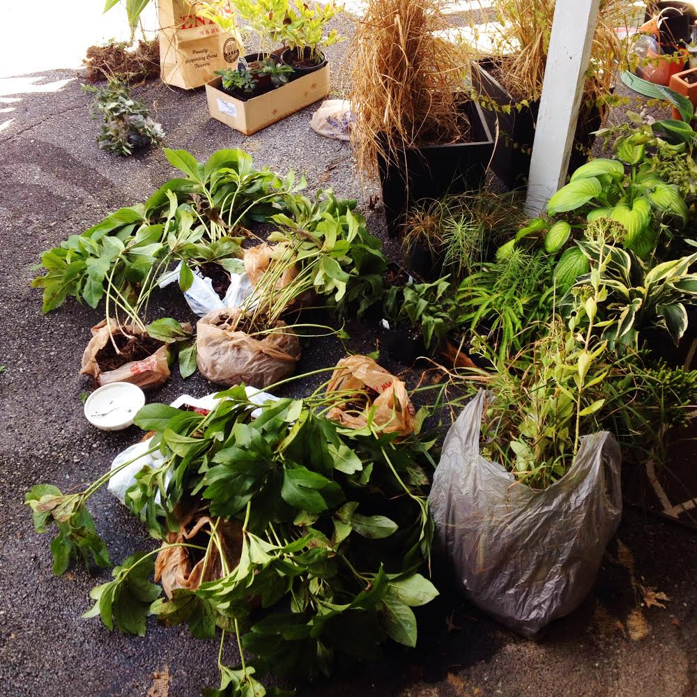 2014 Fall Sale A Friendly Plant Swap Renaissance Corner