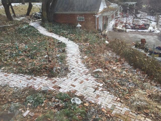 Winter look of Belle's mixed garden with columbine and iris