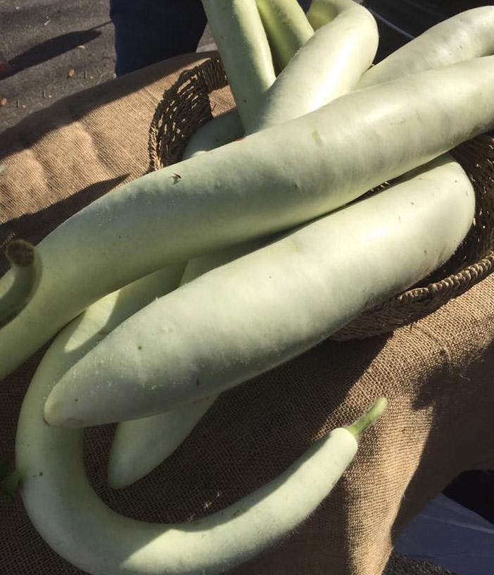 Fresh Sicilian Serpentine Squash